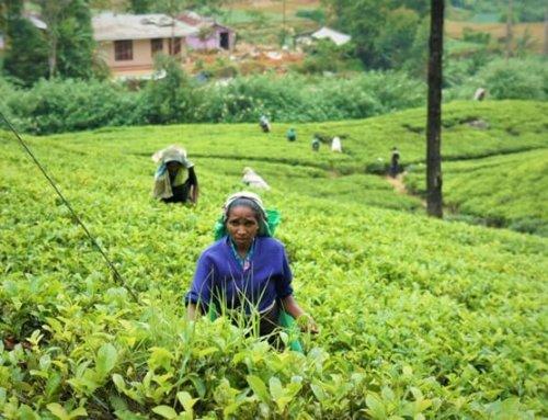 5 gute Gründe, um Sri Lanka zu besuchen